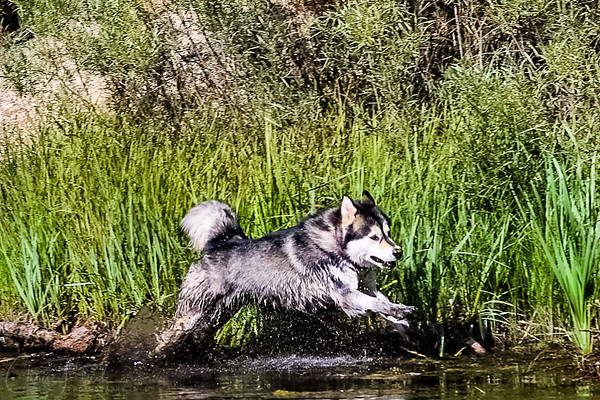 Sonja on the South Platte River