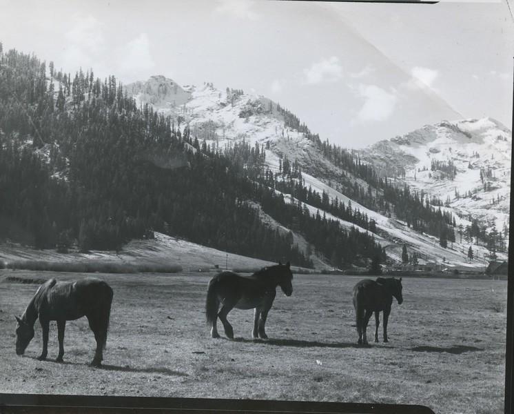 1989 - SV meadow w: horses.jpeg