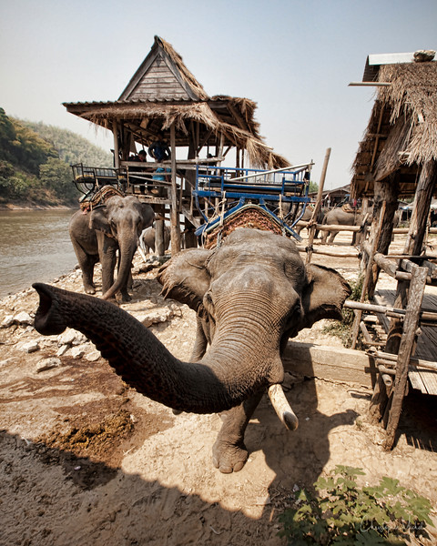 20100227_chiang_rai3_elephant_boat_7008.jpg
