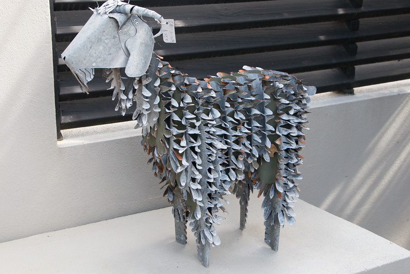 Moko goat 5761