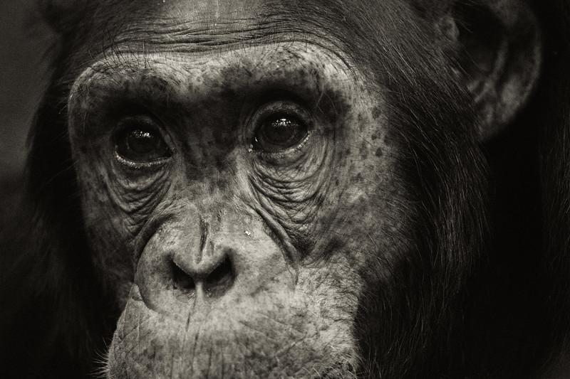 Uganda_T_Chimps-1730.jpg