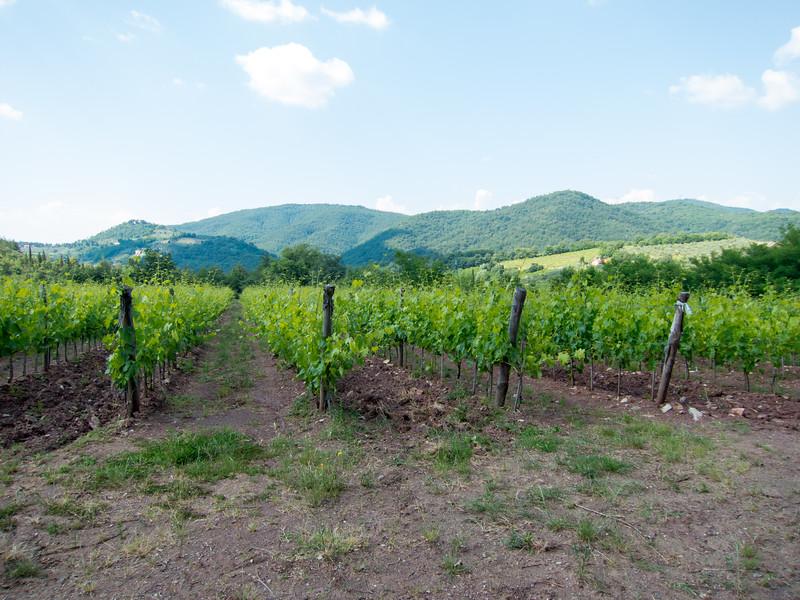 2015.06.03 Backroads Toscana 0124.jpg