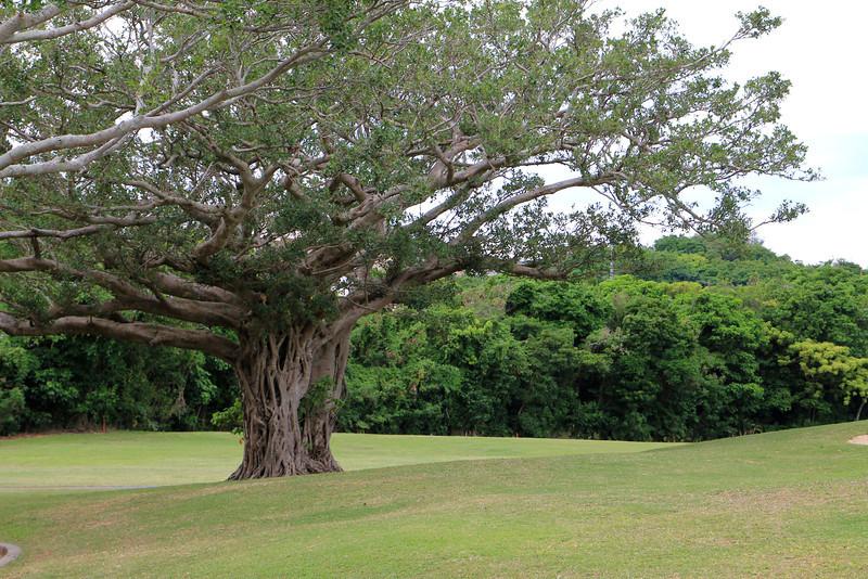 Okinawa 067.JPG