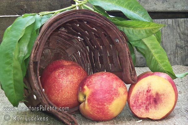 Fantasia Nectarine - Prunus persica var. nucipersica