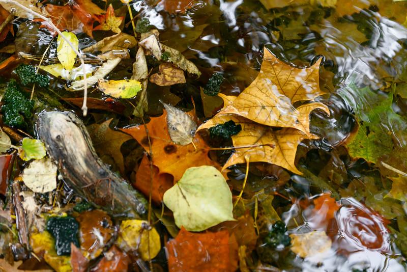 Leaves II-5841.jpg