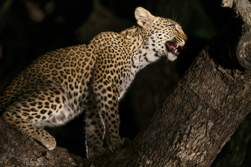 LeopardHills-20180930-2520.jpg
