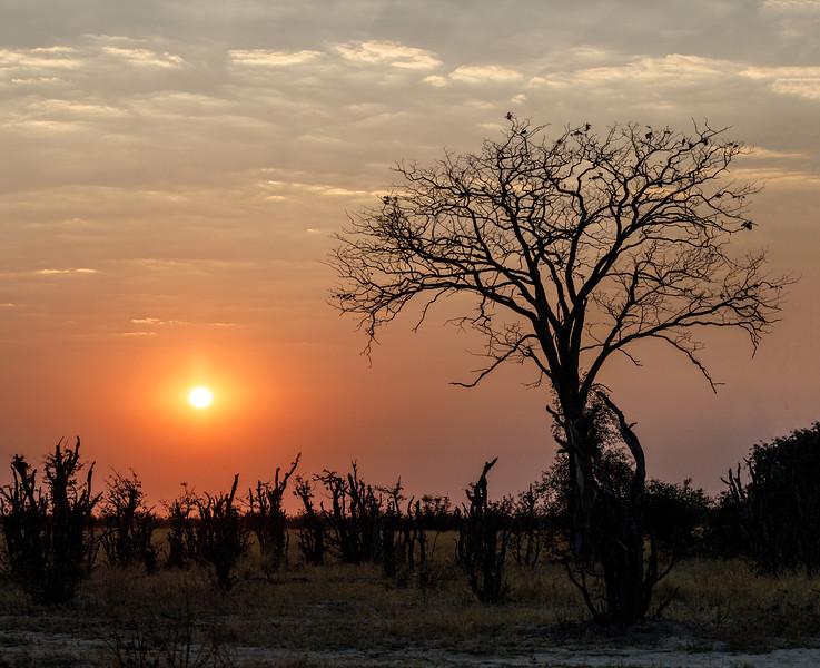 Botswana_0818_PSokol-4237-Pano-Edit.jpg