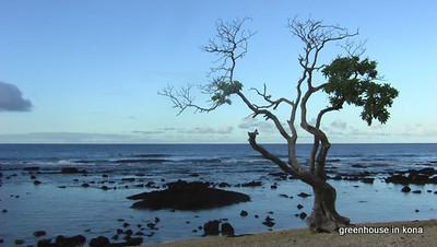 YNOld A Tree.JPG