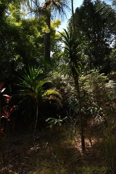 Madagascar 2017 (10)