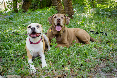 Kirsten & Dogs