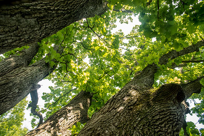 Taltree Arboretum  Hike