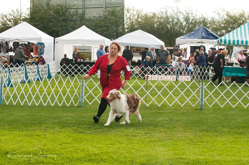 20170114_Kachina Kennel Club_Aussies-43.jpg