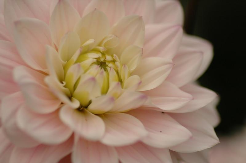 Beautiful Pink Flower - Bohemia, Czech Republic