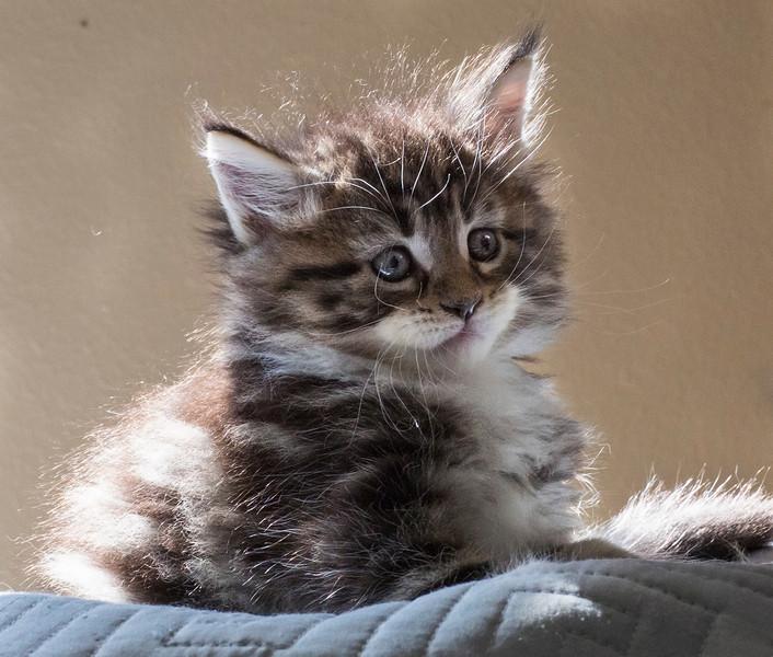 Kittens227.jpg