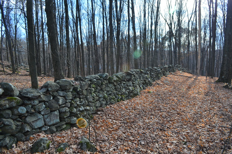 Many stone walls on property.  Presumably these were made so fields could be mowed.  This one runs parallel to South Street.