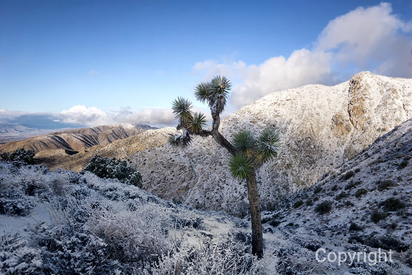 Joshua Tree Keys View in Snow