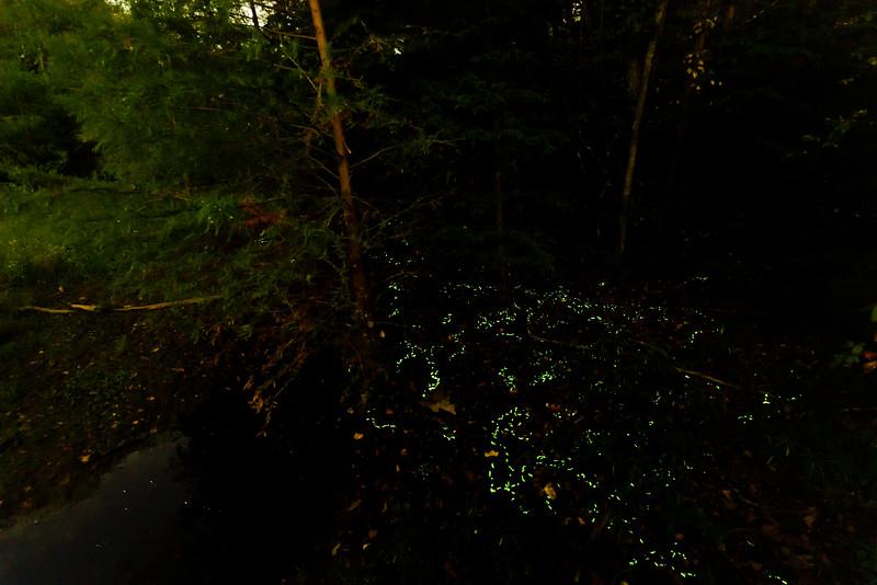Glow Worms of Bernheim Forest