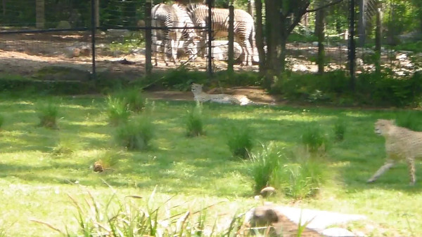 National Zoo (Video)