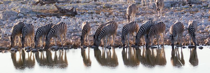 ZebraS-7.jpg