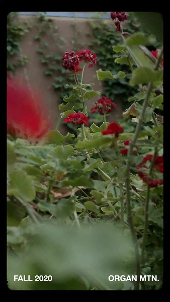 Flowers Vertical.mp4