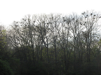 2012 Heron Count