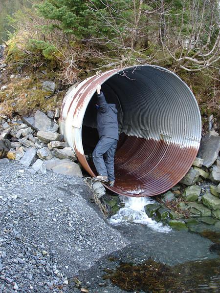 Alaska 2008 119.jpg