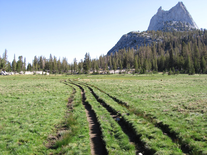 Multi-threaded trail, with older traces slowly filling in and recovering. Modern trail practices route trails along edges of meadows rather than through the middle like this portion.