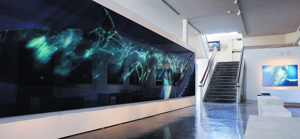 . Monterey based photographer Bryant Austin has been photographing and printing life sized images of whales he dives with in the Monterey bay. His work is currently on display at the Museum of Monterey. (Matthew Hintz/Sentinel).