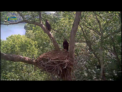 Other EAGLE cams