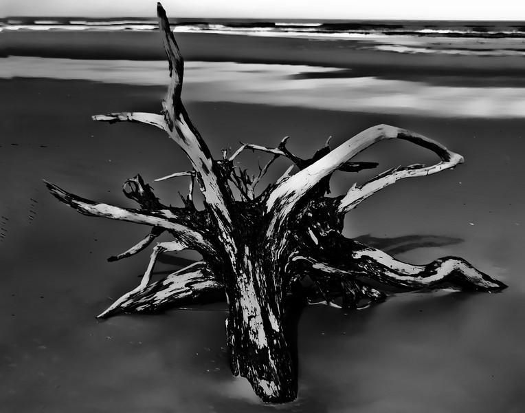 Driftwood_11x14.jpg