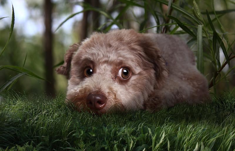 Gordon-dog-1.jpg