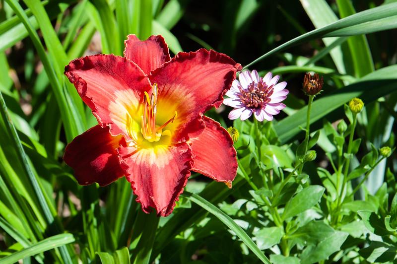 20190714 Daylilies and Flowers-6403-2.jpg