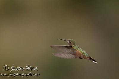 Hummingbird 8-25-2013