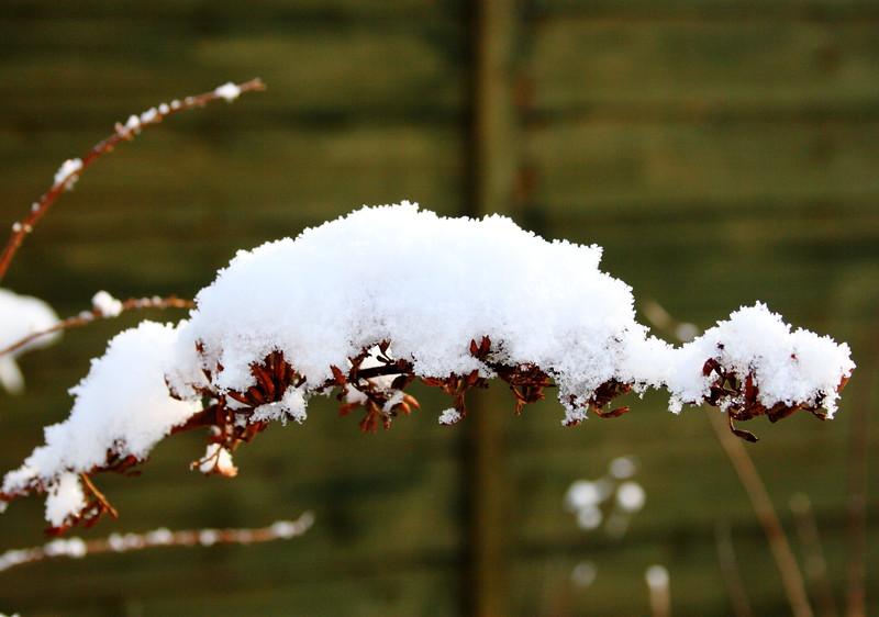 snow Feb 2012__004.JPG
