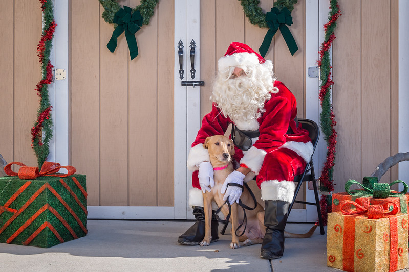 Pet Pictures With Santa-51.jpg