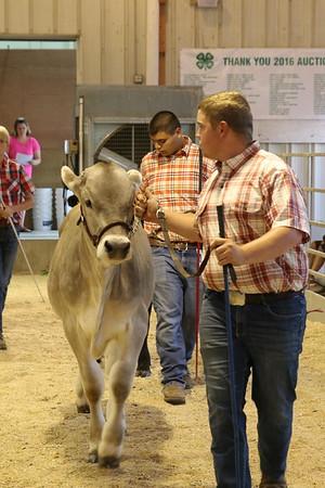 2017 Dairy Beef Show
