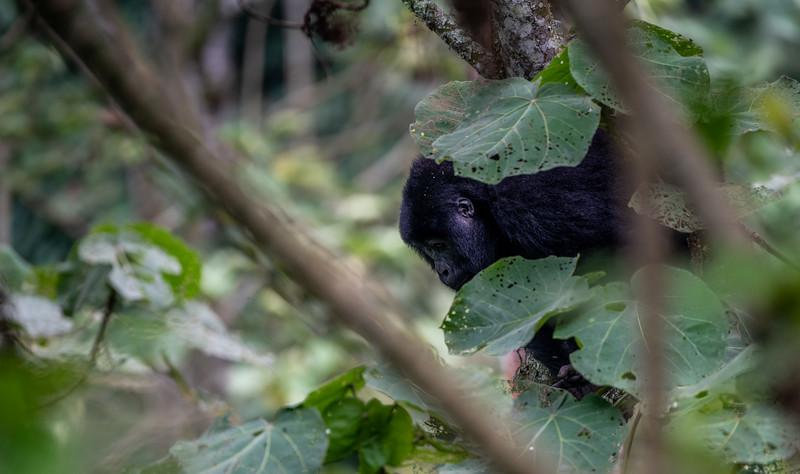 Uganda_T_Gor-2762.jpg