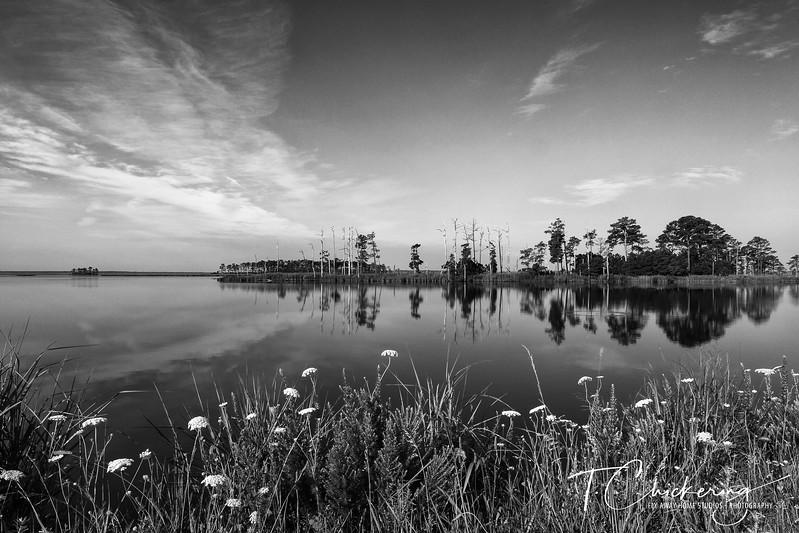 Blackwater Landscape-1505676760344.jpg
