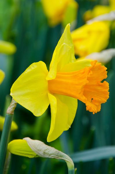 Filoli Estate Gardens - March 2011