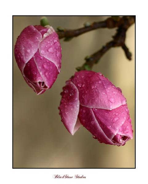 MATTED FLOWERS--2.jpg