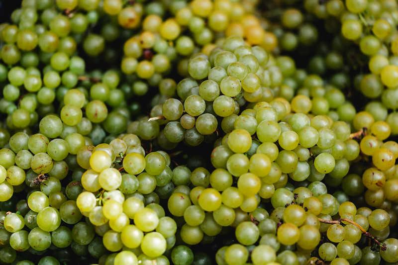 white-grape-wine-harvest-picjumbo-com.jpg