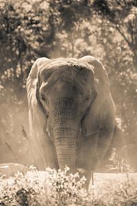 Elephants, Giraffes, & Zebras