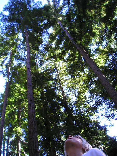 Mariel suggests that we pause and admire the redwoods, which are taller than all of us put together.