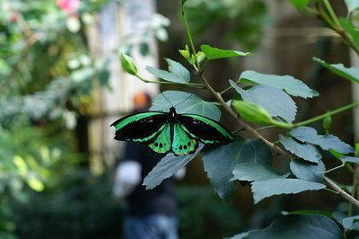 Other butterflies, etc. not quite favorites