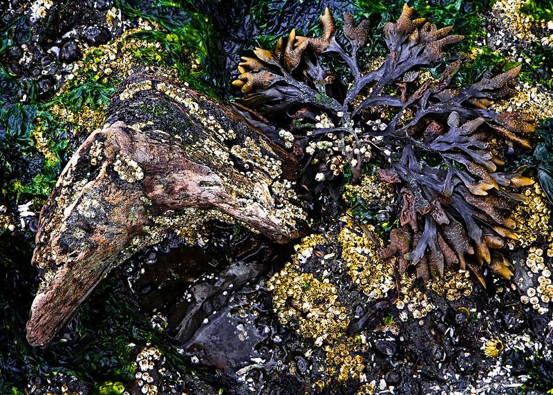 Alki Beach Closeup II