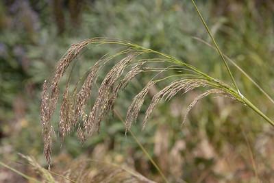 Case 0066 grass id