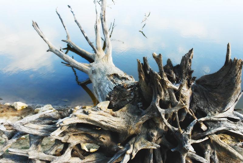 fallen_tree2.jpg