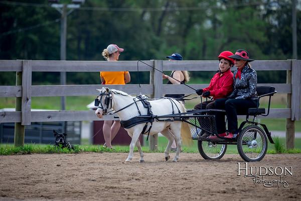 36 Mini Horse Driving Jr