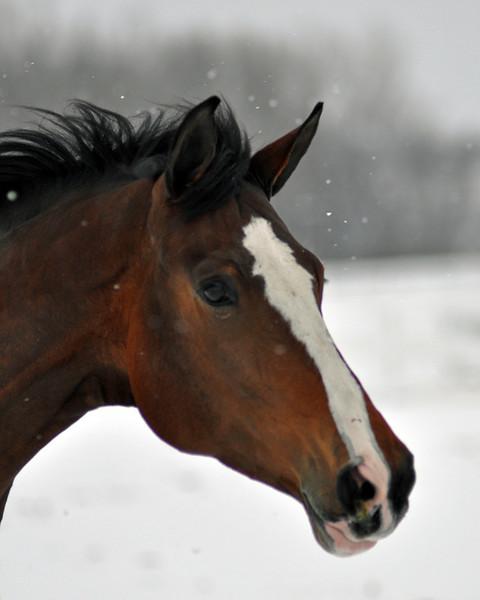 Snowy Dalanta 172 RETOUCHED.jpg