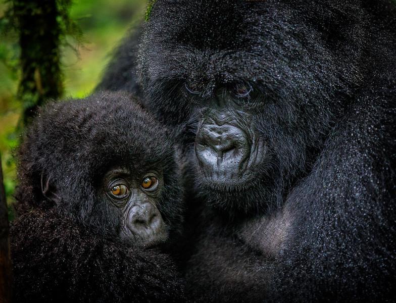 African_Apes_0218_PSokol-5114-Edit-Edit.jpg